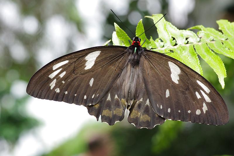 蝴蝶蝴蝶生得真美麗 (40P)