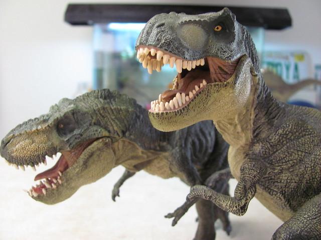 Two rexes comparison 01