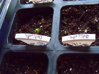 plant tags2