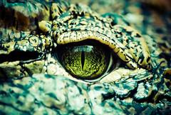[Free Images] Animals 2, Reptiles, Crocodilias ID:201204281600