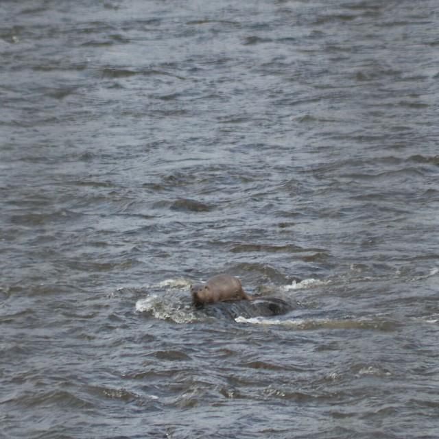 Raploch Otters 1