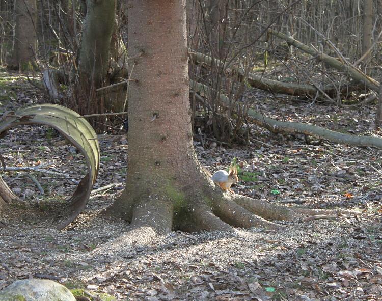 oravainen
