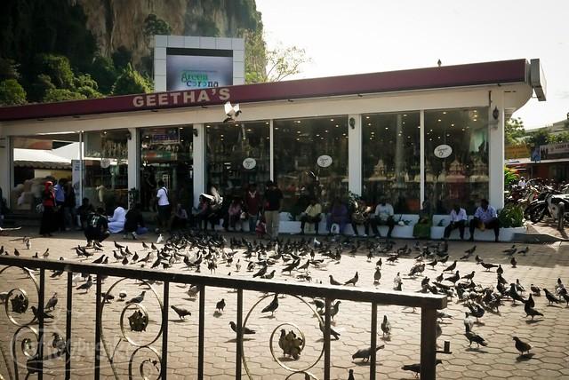 Pigeons at Batu Caves
