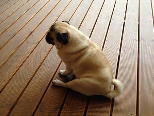 Sitting Paul