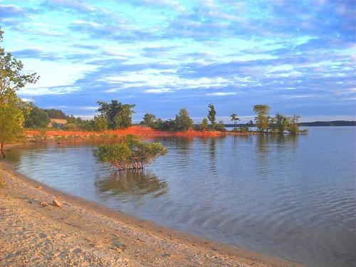trees sunset sky lake water dusk shoreline