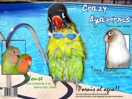 """Portada revista """"Crazy Agapornis"""""""