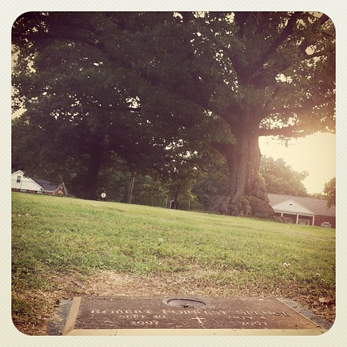 I love sitting by his spot looking at the big tree I know he would have loved climbing.