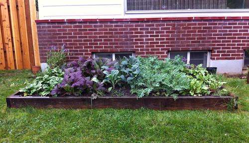 spring 2012 garden
