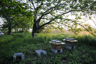 beehives in the riverside Kitakami
