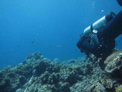 椰油港外的蝶魚(圖中央小黑點)(林育朱 攝)