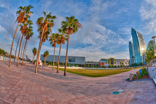 Palm Trees and Curtis Hixon Park