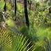 Palms in the sun - Palmas en el sol; al sur de Zapotitlán Palmas, Región Mixteca, Oaxaca, Mexico por Lon&Queta