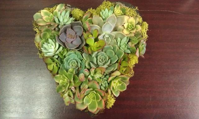 Succulent Heart!