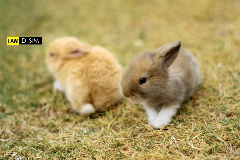 Baby Rabbit (10)