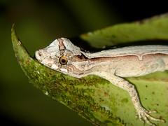 Reptiles of Ecuador