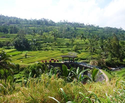 Bali-Route Legian-Jatiluwih (52)