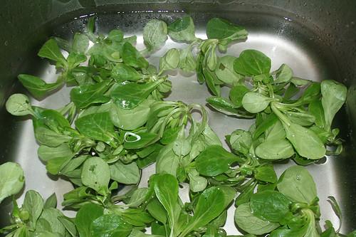 23 - Salat waschen / Wash salad