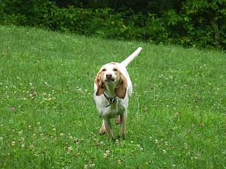 gary-scott-dog