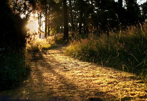 light summer sun sol sunrise canon 50mm forrest sweden skog sverige sommar soluppgång uddevalla ljus strålar bestshotoftheday 5dmarkii 5dmk2