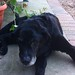 June 1996 - July 2012 we will miss you Miss Elly by MAD MUMMY