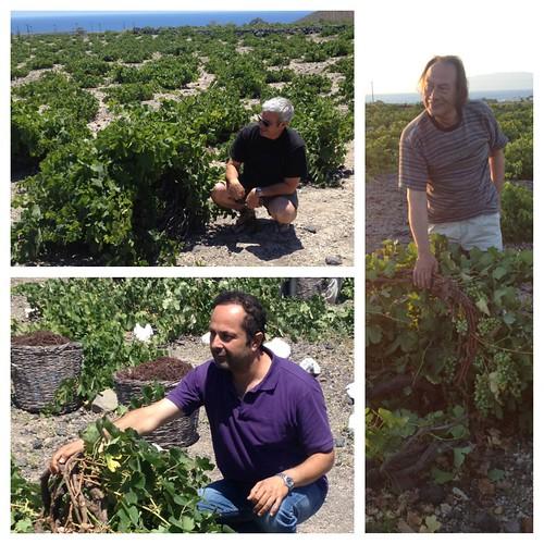 assyrtiko vines santorini