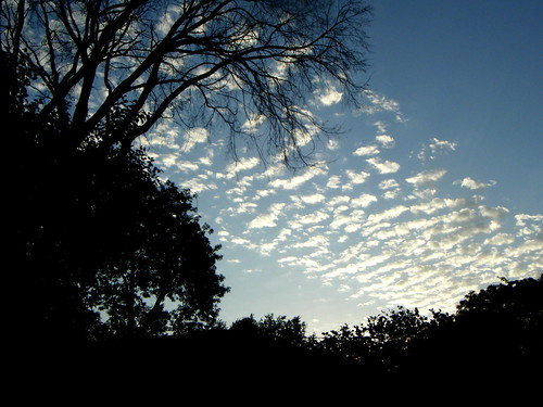 trees sunset summer sky weather clouds skyscape landscape outdoors evening pwpartlycloudy