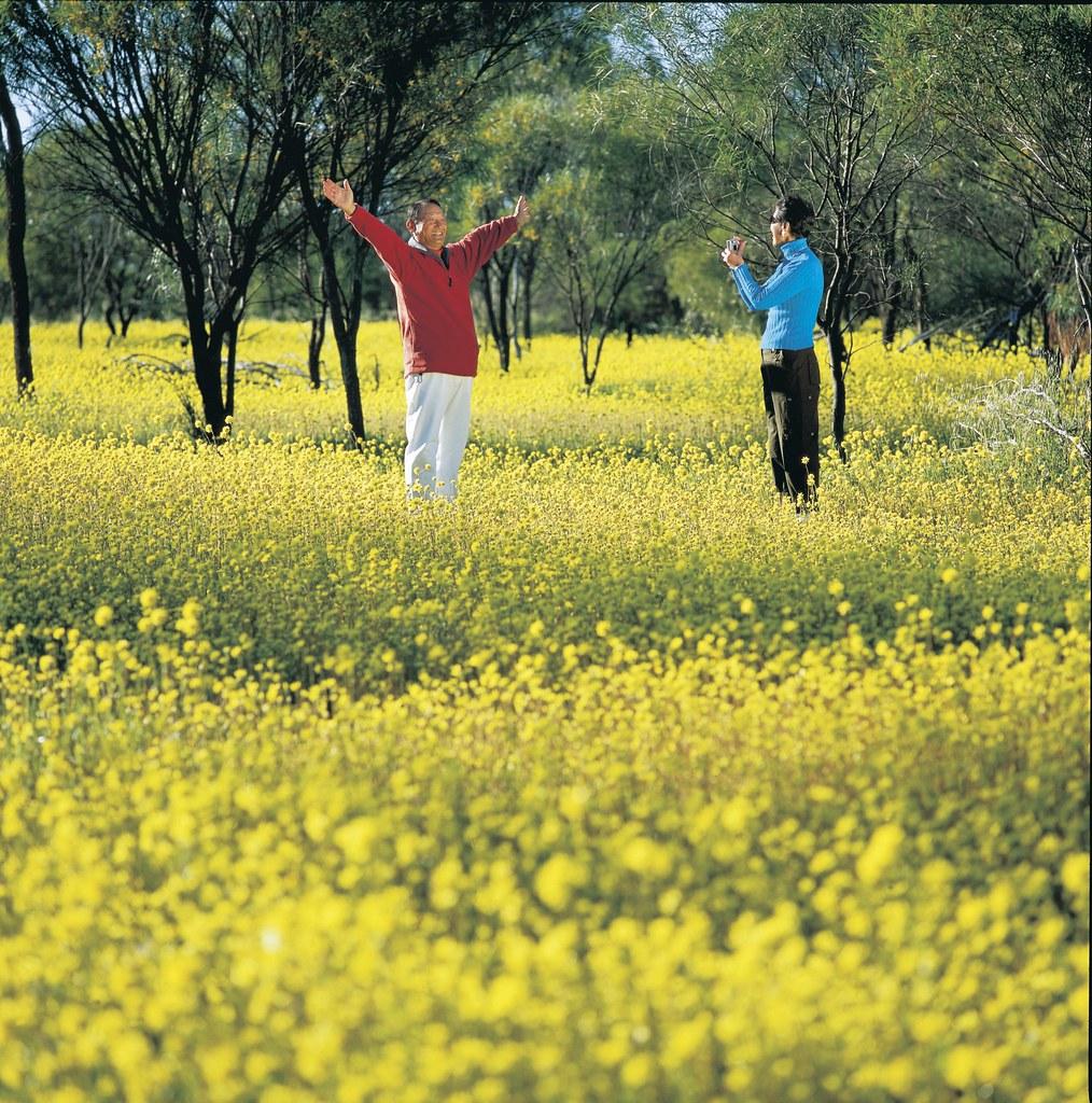 003834-786wildflowers yellow.jpg