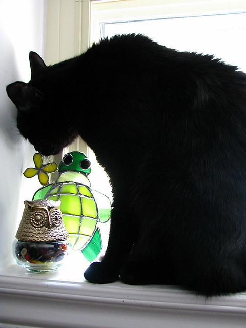 henry, the owl & the turtle