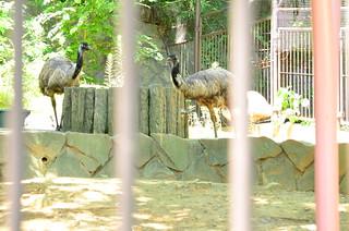 エミュー görüntü. zoo 動物園 tamazoo tamazoologicalpark 多摩動物園