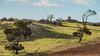 Sothern Flinders area-7860.jpg