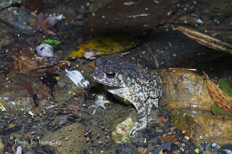 練習-小雨蛙吹泡泡