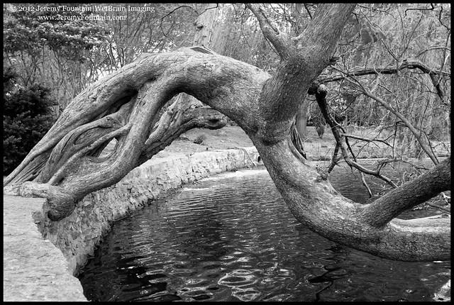 Lake Watauga (Centennial Park)