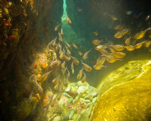 Snorkeling Soufriere