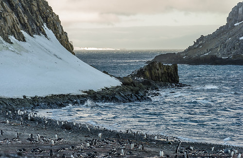 Penguin Colony on Barrientos Island by Duane Miller