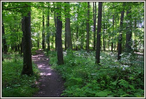 ontario canada green sunshine forest air oxygen trail londonontario