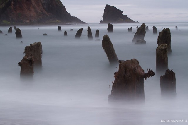 Ghost Forest of Neskowin