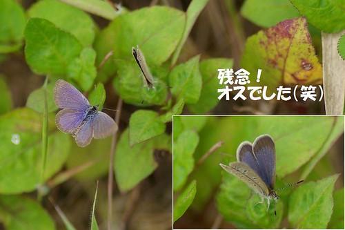 誤求愛ハマヤマト 2012.05.01 1311