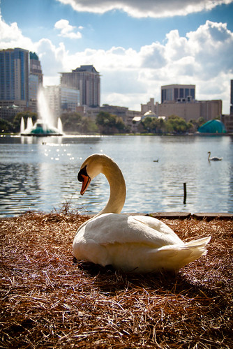 sunset fountain skyline golden orlando swan downtown day glow florida cloudy lakeeola