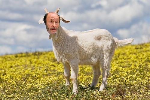 rubal-cabra