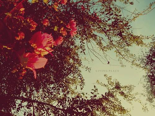 Eu queria conhecer, o paraíso. by A melhor ideia.