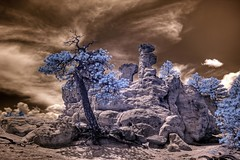 Infrared HDR Pulpit Rock Park Colorado Springs