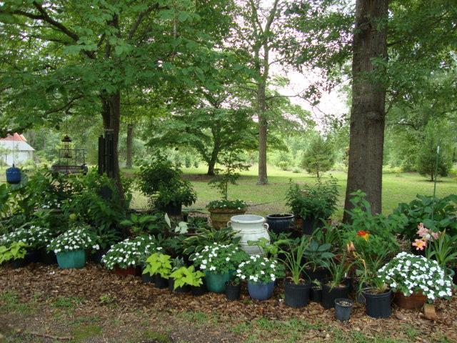 Virgin soil garden bed under trees ground full of for Landscaping rocks under trees