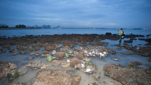 City reefs: Kusu Island's living reefs with city at dawn