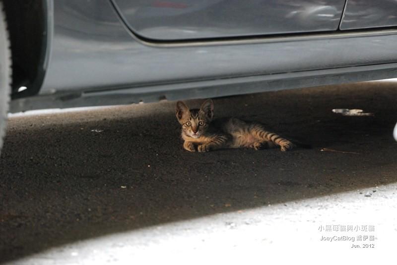 2012_0618_小黑母貓與小斑貓DSC_4870