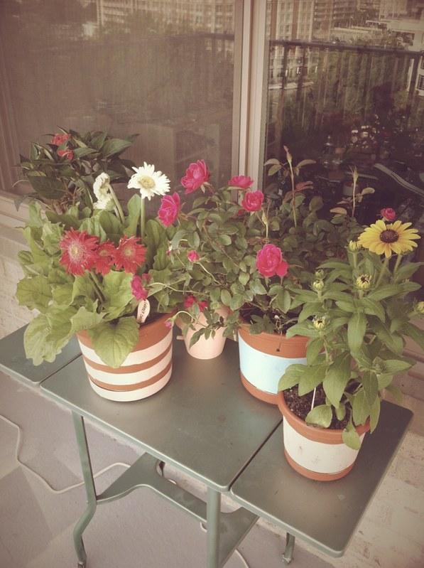 Garden_6.2012