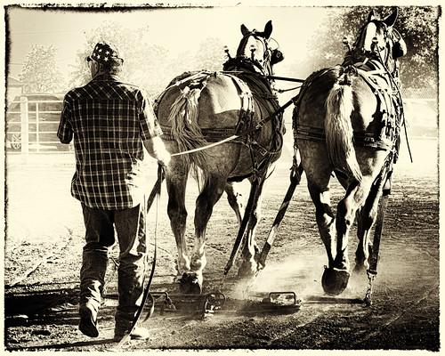 Horse pull 1 SEP