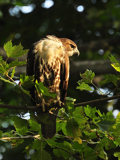 Cathedral RT Fledgling