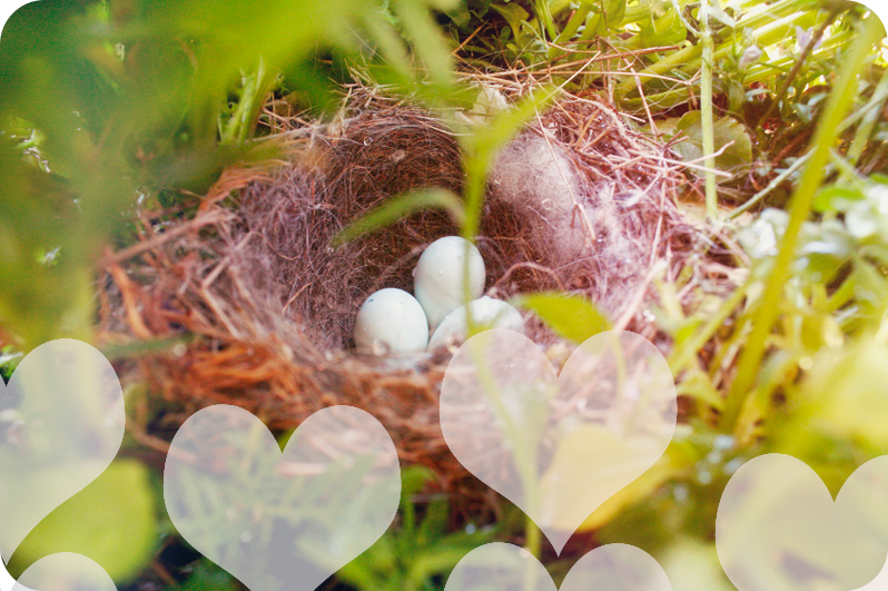 {hanging basket} bird nest
