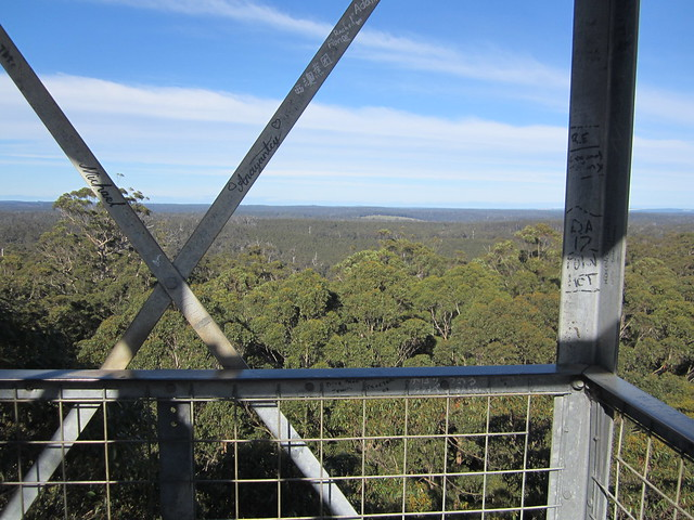 View from the Gloucester Tree, Pemberton