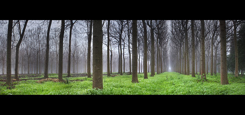 morning winter panorama colour tree contrast photoshop sunrise canon golden branch pattern shine stitch pano australia richmond plantation repetition trunk windsor aussie hawkesbury cs3 500d rhyspope